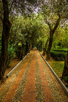 Tree-lined Lane In Taormina Sicily by Xavier Cardell