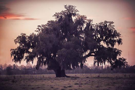 Tree of life in St. Bernard  by Alicia Morales