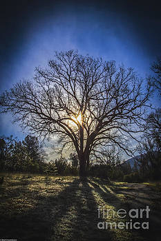 Tree Of Life by Mitch Shindelbower