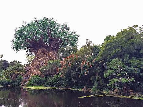 Tree of Life by Rachel E Moniz