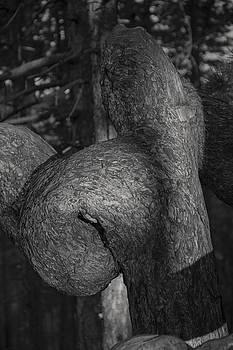 Tree Of Love by Zeljko Dozet