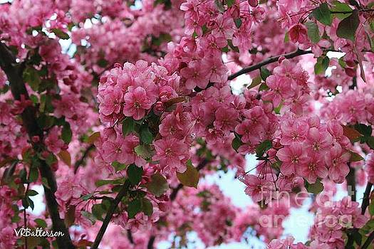 Tree of Pink by Veronica Batterson