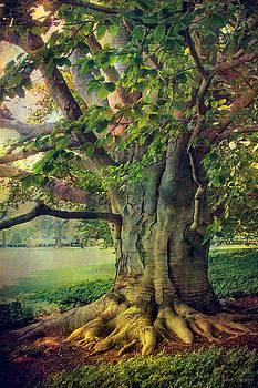 Tree of Wisdom by John Rivera