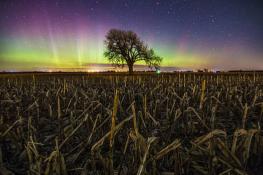 Tree of Wonder by Aaron J Groen