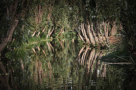 Tree reflection at a side Canal in Xochimilco by David Resnikoff