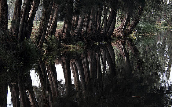 Tree reflection at Xochimilco by David Resnikoff