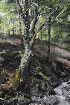 Tree River Wood by Harry Robertson