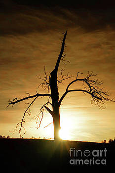 Tree silhouette at sundown by Bill Gabbert