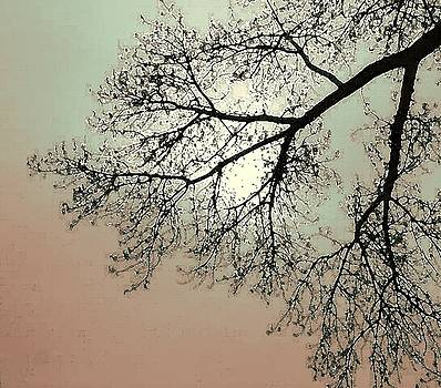 Tree Silhouette by Edward Hass
