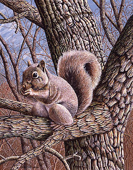 Tree Snackin - Grey Squirrel by Craig Carlson