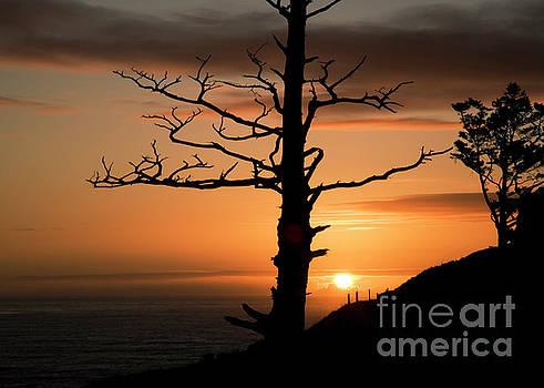 Charmian Vistaunet - Tree Snag and Sunset