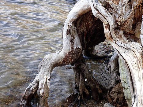 Eerie Tree Stump in Lake by Marcia Socolik