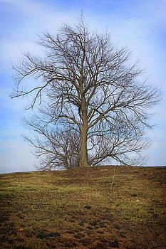 Tree Tendrils by Mark  France