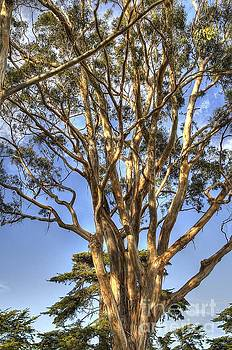 Tree to the Heavens by Matthew Hesser