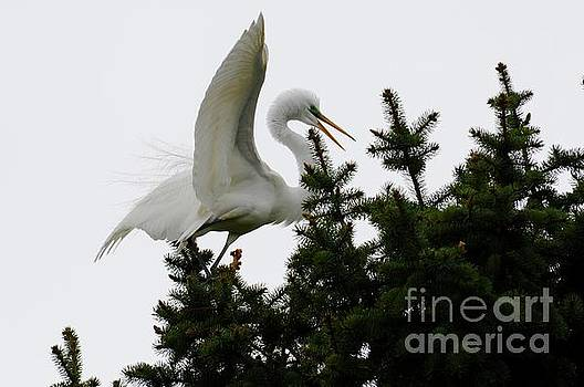 Tree top Landing by Sandra Updyke