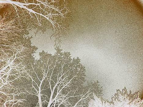Tree Tops by Tonie Cook