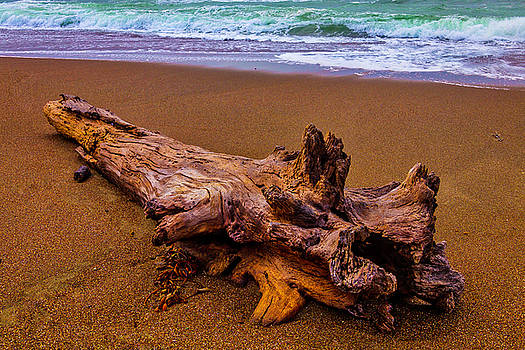 Tree Trunk Driftwood by Garry Gay