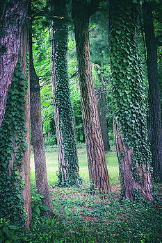 Tree Vines by Albert Stewart