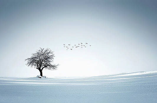 Tree winter by Bess Hamiti