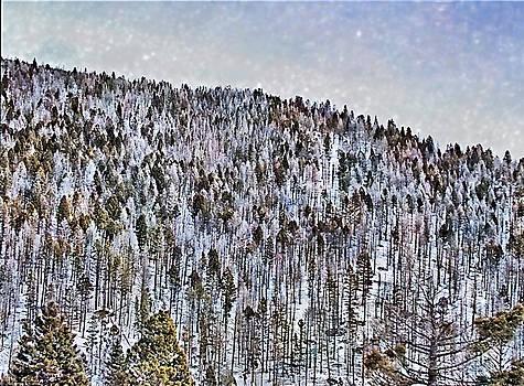 TreeArt by Susan Kinney