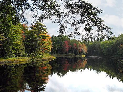 Trees and Pond by Joe Maranzano