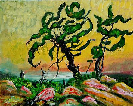 Trees and Rocks by Denis Grosjean