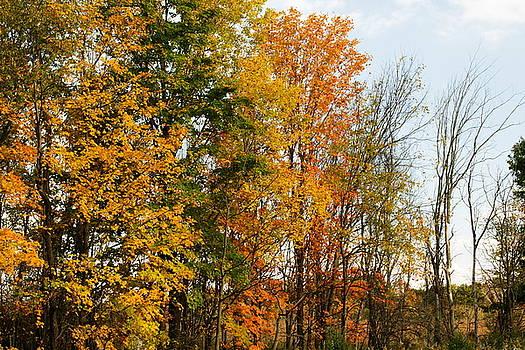 Trees Changing by Amanda Kiplinger