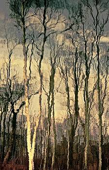 Trees by Gillis Cone