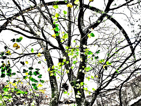 TONY GRIDER - Trees Growing in Silo Abstract- Large Landscape Edition