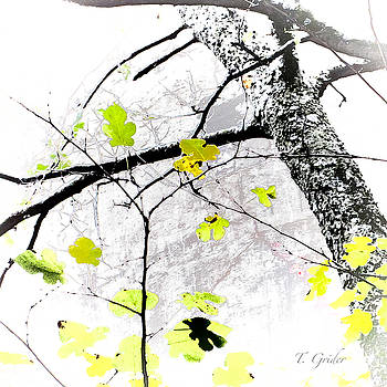 TONY GRIDER - TREES GROWING IN SILO ABSTRACT - SIGNATURE EDITION