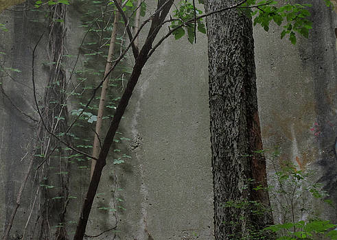 TONY GRIDER - Trees Growing in Silo Gray Edition
