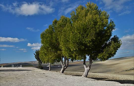 Trees in January by Jo Ann
