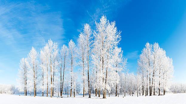 Winter Wonderland by Nebojsa Novakovic