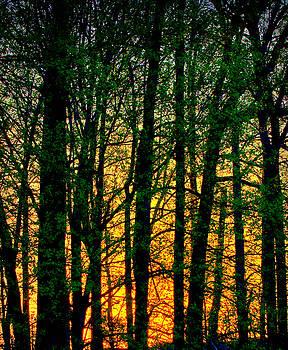 Trees No.2 by Michael Putnam