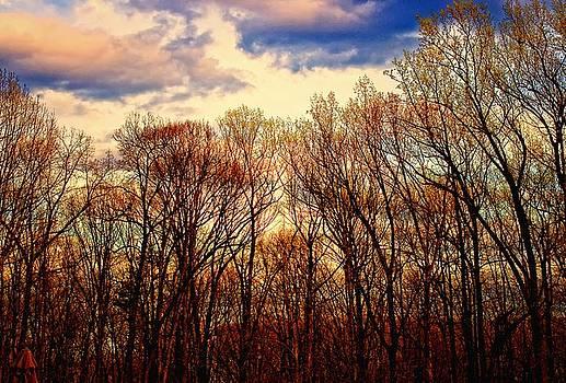 Trees No.3 by Michael Putnam