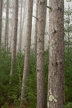Trees on a Foggy Autumn Day 3 by Nancy de Flon
