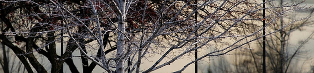 Linda Shafer - Trees Reflected