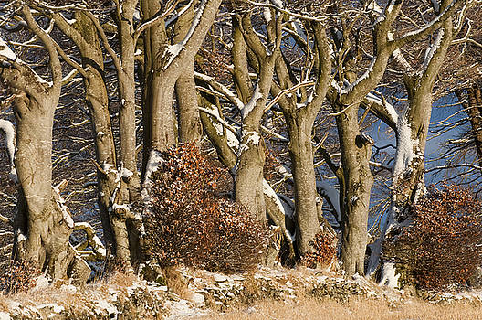 Trees by Sue Arber
