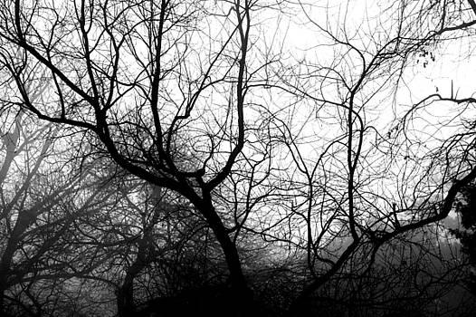 Trees by Tom McElvy