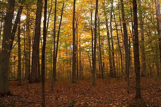 Trees Trees and More Trees by Amanda Kiplinger