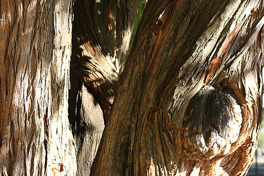 Trees Trunks by Michele Wilson