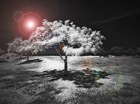 Rolf Bertram - Trees with Science Fiction Sky 91774031