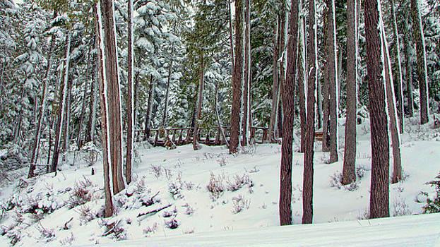 Marilyn Wilson - Winter Forest 2