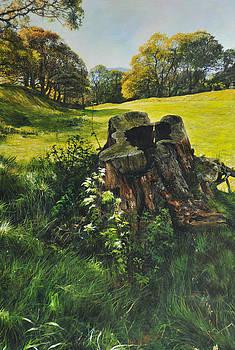 Harry Robertson - Treetrunk at Rhug