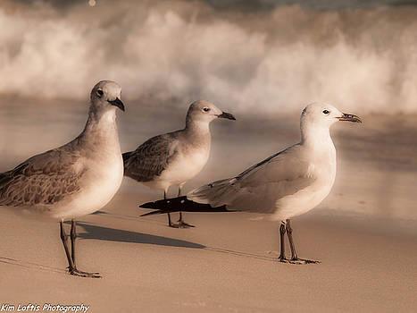 Trio  by Kim Loftis
