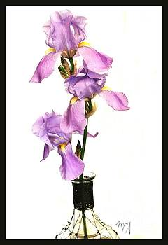 Triplet Irises by Marsha Heiken
