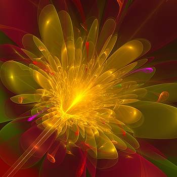 Tropical Flower by Svetlana Nikolova