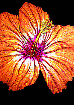 Tropical Hibiscus Orange by Debbie Chamberlin
