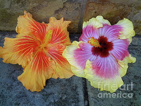 Tropical Pair by Jenny Lee