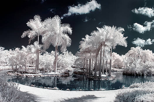 Adam Romanowicz - Tropical Paradise Infrared